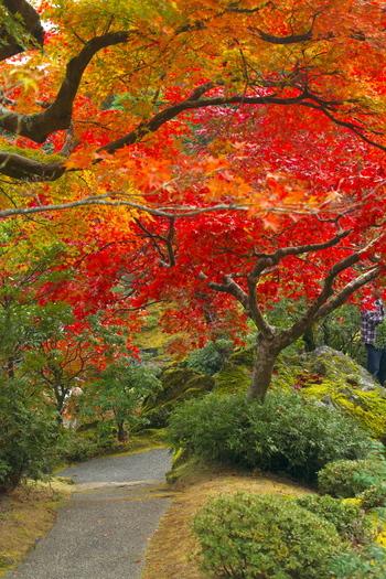 紅葉シーズンは、多くの観光客が訪れます。赤や黄色に染まる紅葉に包まれていると、その美しさに感動するはず。
