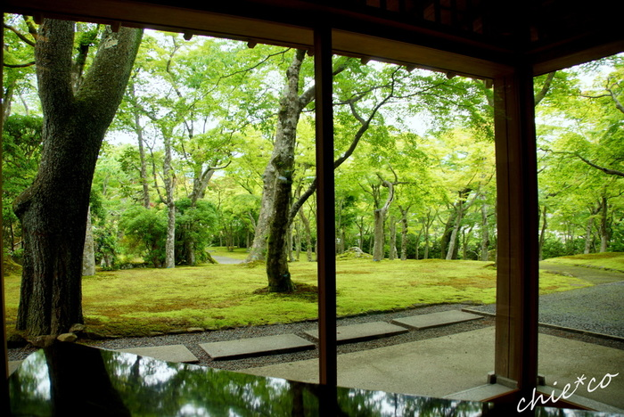 こちらの「苔庭」は、新緑の春や雨に濡れる梅雨、鮮やかな紅葉とのコントラストが見事な秋など、四季折々の美しさが評判です。苔の種類の多さでは日本一と言われていて、 撮影スポットとしても人気です。