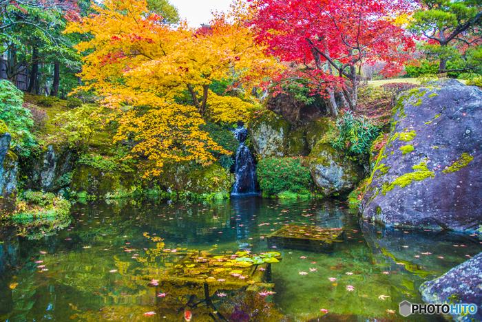 水面に散る紅葉と苔むした石のコントラストも風情があります。広大な敷地は、歴史的文化遺産としての価値が高いということで、国の登録記念物に認定されました。箱根を訪れたら、ぜひ足を運んでみてはいかがでしょうか?