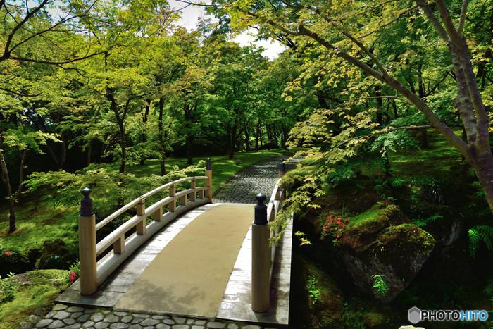 箱根の強羅にある「箱根美術館」の敷地内には、「神仙郷」という日本庭園があります。箱根美術館の創立者・岡田茂吉氏が1944年(昭和19年)に、実業家・藤山雷太氏の別荘地と強羅公園のうち、和風庭園部分を買収し再整備したものです。園内には約130種類の苔があり、青々とした緑色が趣きのある風情を醸し出しています。