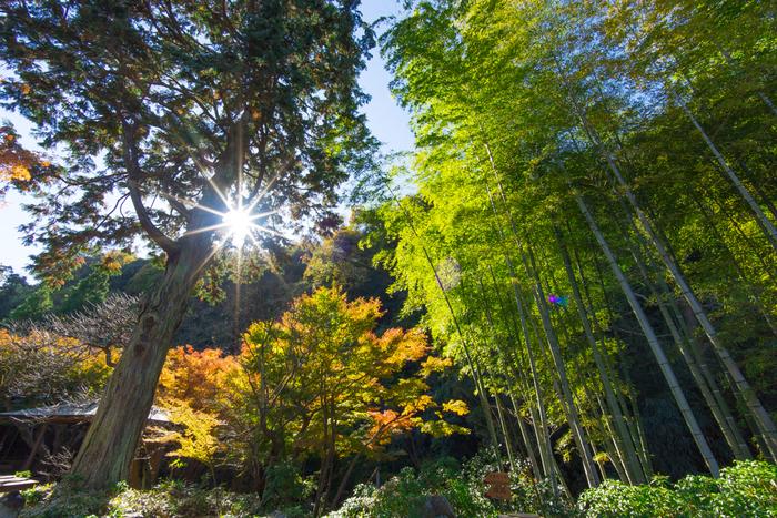 1年を通して、四季の移ろいを楽しめるのも魅力のひとつ。雑木林の景色を好んだという一条恵観氏のこだわりや、自然に対する心が伝わってくるようですね。