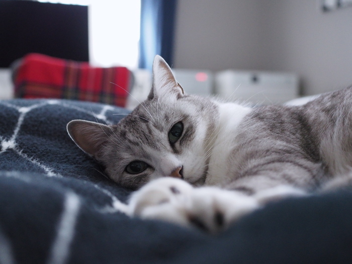 人間だけではなく、ペットも快適に過ごすためには工夫が必要です。お部屋の雰囲気を壊さず、ペットが居心地よく暮らしていくためにはどうしたらいいのか、すぐに試すことができる小さなヒントを考えていきましょう。