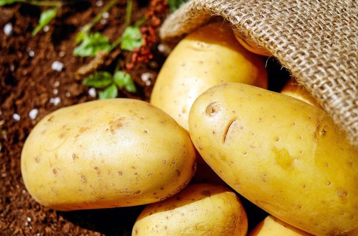 白や茶色の食材は、ジャガイモ、長芋、ゴボウ、レンコン、大根など根菜類が多めです。根菜類は食べ応えもあるので大いにお弁当のおかずに活用していきましょう!