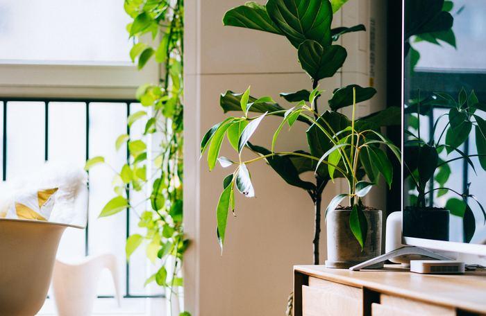 お部屋のアクセントになる、インテリアグリーンをサイズ別にご紹介しました。窓辺に吊るしたり、テーブルに飾ったり、個性豊かな観葉植物の楽しみ方はさまざまです。今回ご紹介した内容をご参考に、あなたのお部屋にぴったりのグリーンを見つけてくださいね。