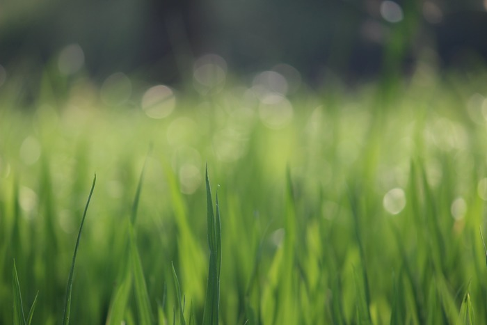 """【絵本のある暮らしvol.1】""""自然""""をそばに感じて、心豊かな時間が過ごせる作品8選"""