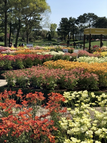 四季折々の植物を楽しめ、自然の中で花々に癒されながらリラックスした時間を過ごせますよ。