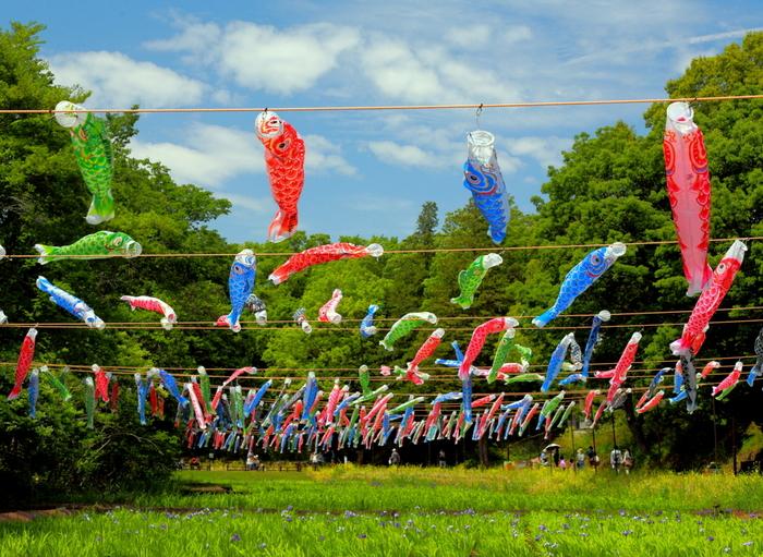 「谷戸の菜の花畑」には、約300匹のこいのぼりが空に泳ぎます。風になびくその様は、どこかノスタルジックな気分にさせてくれます。