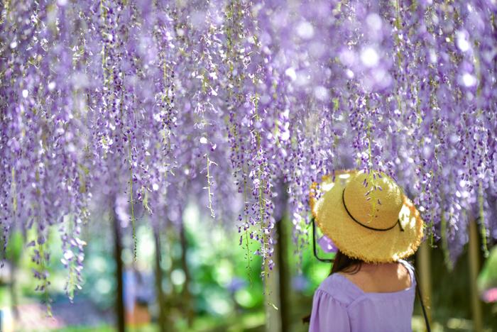 日常で仕事や家事に追われていると、少し心が疲れたなぁと感じることはありませんか…?そんなとき、自然のものに触れることで不思議と心が休まるものです。春から初夏にかけてやってくる、お花のシーズンに訪れたい関東のスポットをご紹介します。