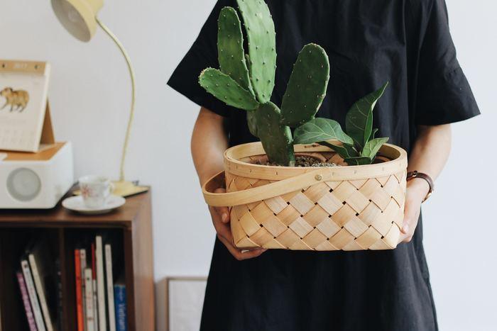 観葉植物の鉢をまとめてバスケットに入れるだけで、寄せ植えのような雰囲気に。鉢の高さが違う植物も、深めのかごを選べば大丈夫。自然界のもの同士は相性抜群です。