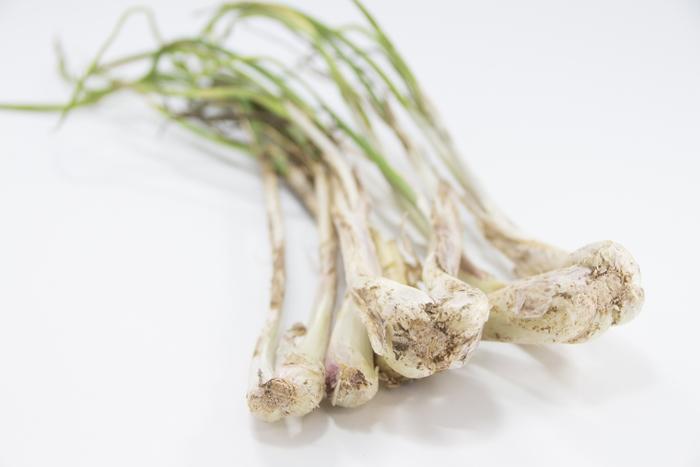 こちらは沖縄県独自のらっきょうの品種「島らっきょう」。小型でネギに似た辛みや強い香りが特徴で、最近注目を集めています。12月〜6月までが収穫期で旬は春。スーパーにも多く出回り、レシピも豊富なのでこちらもぜひ試してみてはいかがでしょうか。