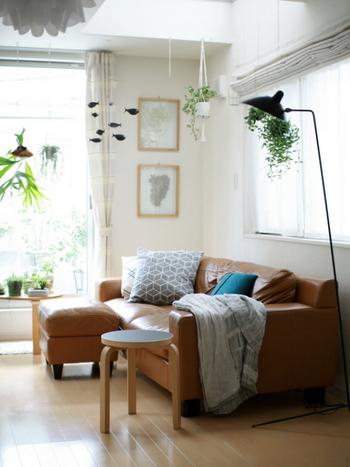 夏インテリアにも、季節のインテリアグリーンを取り入れるのがおすすめ。みずみずしく潤いのある空間づくりに一役買ってくれますよ。