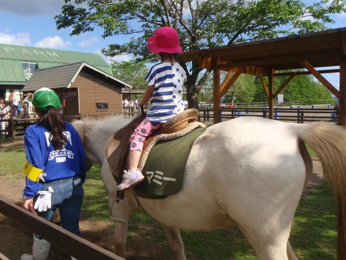 四季折々の美しい花が咲く牧場には、羊、馬、アルパカ、うさぎなど様々な動物がいて、乗馬体験や、餌やり体験ができる他、ショーやイベントも多く、一日たっぷり自然の中で遊べます。