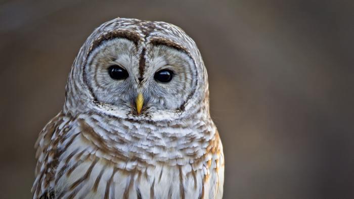 動物たちには種によって活動に一番適した時間帯が異なるそうですが、人にも同じことが言えるようです。ご存知の方も多いかとは思いますが、無理をして日中に動き回るより、夕方からのほうが活動しやすいという人もいますよね。自身の体とよく相談して一番調子のいい時間帯に一番やりたいことができるようにすると、達成感とともにモチベーションも上がっていくはずです。