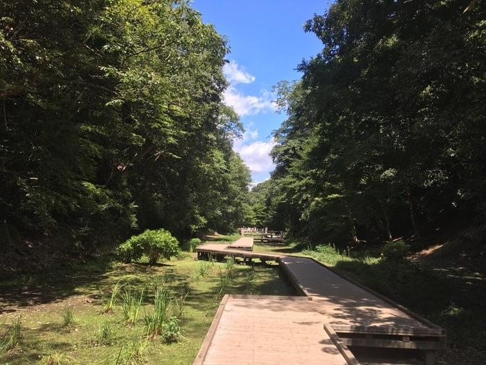第一駐車場から滝までは徒歩約5分です。駐車場の入り口の右側にある階段を降りると趣のある木道があります。