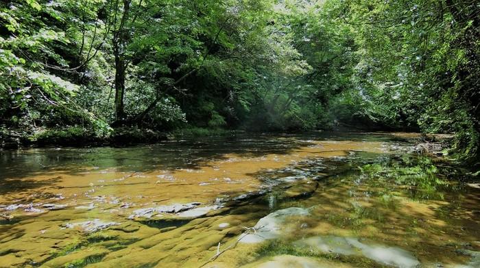 水も澄んでいてとてもキレイ。緑の美しい時期は訪れるだけで心から癒されそう。