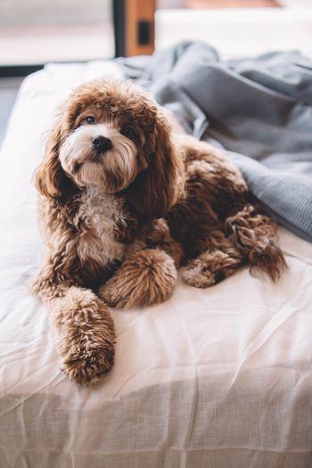 何もしない休日だって、十分有意義なものです。大切なのは「能動的に休む」こと。疲れきってやむなく昼まで寝ている、というのとは異なります。「めいいっぱいごろごろを楽しむ日!」「なーんにもしないで脱力する」というように、目的をもって休息しませんか。