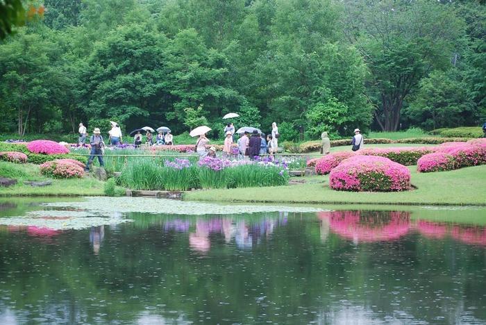 """慶応3(1867)年に二の丸御殿が焼失した後は、荒廃の一途をたどりましたが、当園公開の昭和43(1968)年に、再び造園され、今に至っています。現在の庭園は、九代将軍・家重の頃に作成した庭園の図面を基にして復元された""""池泉回遊式庭園""""です。【しっとりとした風情も魅力な雨の日の「二の丸庭園」(5月末撮影)】"""