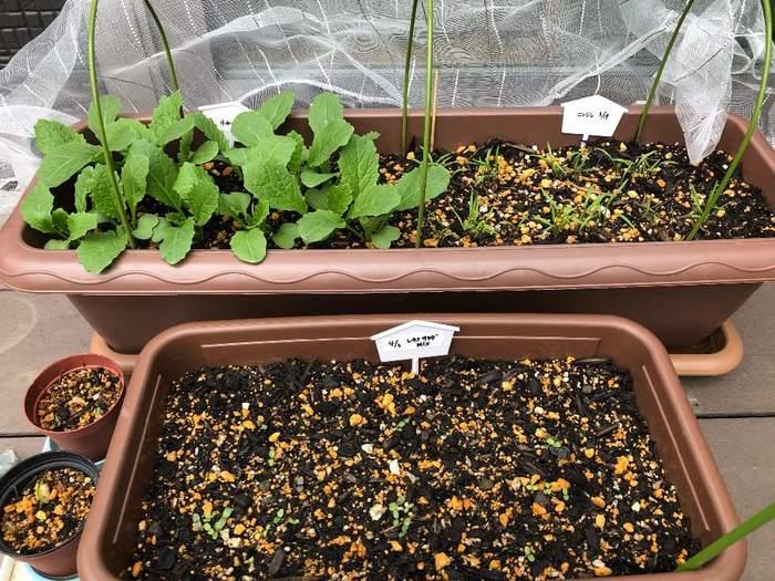 プランターを選ぶ時は、育てる野菜の根の張り方で向いている形が変わってきます。ベビーリーフタイプの葉物を育てるなら「浅くて広いタイプ」を。トマトやきゅうりなど上に向かって大きく育ち実がなる物は根を深く張るので、深さがあり土がたくさん入る「野菜用コンテナ」がおすすめです。