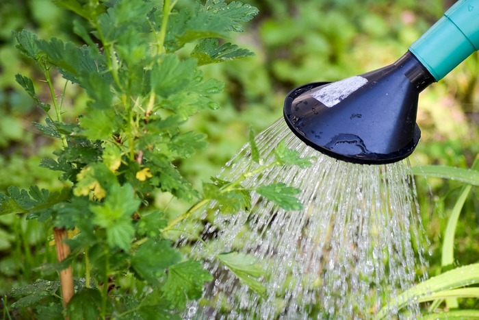 苗の場合、ポットのような水差しタイプの物でもいいのですが、種を蒔いて栽培する場合、水差しタイプだと水が強く当たった場所の種が流れたりする事も。水がシャワーのように出る「ハス口」のついた物を用意しましょう。