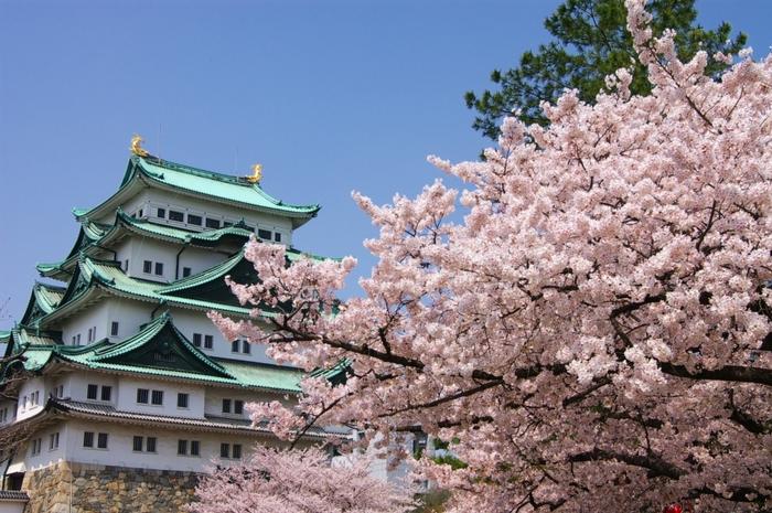 名古屋を代表する観光スポット「名古屋城」は慶長14年(1609年)に織田信長生誕の城とされる那古野城の跡地に、徳川家康が築城しました。以降、徳川御三家の1つである尾張徳川家17代の居城として明治まで利用され、国の特別史跡に指定されています。