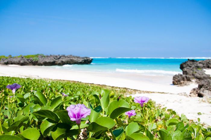 島ならではの美しさと言えば、大切に守り育てられてきた豊かな自然。新鮮な空気で伸び伸びと育った緑、ハイビスカスやブーゲンビリアなどの亜熱帯の花々が青空に映えます。その光景は、都会の雑踏を忘れてしまうような、自然の素晴らしさを感じさせます。
