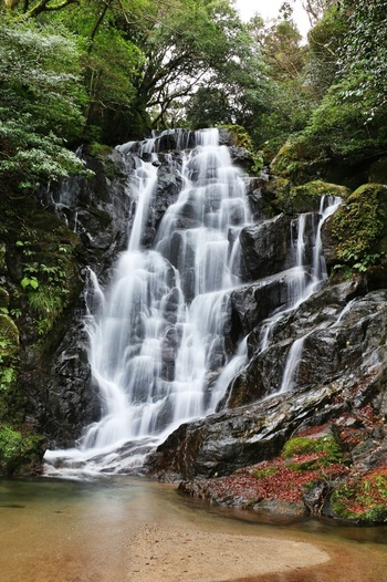 福岡県指定の名勝である「白糸の滝」。標高900メートルの羽金山の中腹に位置し、落差は約24メートル。真っ白なしぶきをあげて、まるで絹糸のように落ちる水流は、繊細でありながらまさに圧巻!夏には涼を求め、秋には紅葉を楽しみに訪れる観光客も多く、6月下旬~7月上旬には5千株10万本の紫陽花が咲き乱れ、マイナスイオンと自然あふれる人気の観光スポットになっています。