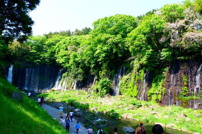 白糸の滝へ向かう手前には、落差25メートルの「音止の滝」があります。とても迫力のある滝で、別名、「音無の滝」と言われています。白糸の滝は、遠くから見ているときは横幅の広さに驚かされますが、近くで眺めると、今度はその高さに圧倒されます。是非、どちらの眺めも堪能したいですね!