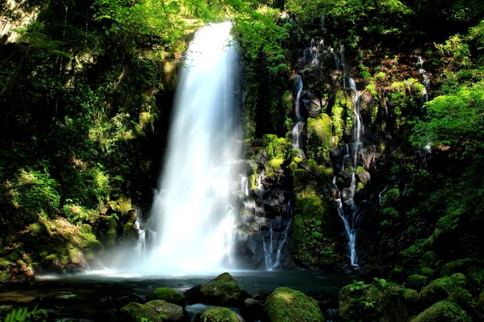熊本県阿蘇郡にある白糸の滝は、木山川の支流、滝川にかかる滝。別名「寄姫の滝」とも呼ばれ、悲恋を伝える伝説があります。この滝の上には、ヘビの穴と呼ばれる洞窟があり、1年を通じて水量が豊富で、20mの落差を流れ落ちるそのさまは、まさに圧巻です。ちなみに熊本の名水100選にも選ばれています。  滝を目の前にすると、マイナスイオンたっぷりの空気の綺麗さに思わず深呼吸せずにはいられません。  高さ約20mの岩肌を滑るようにして流れ落ちる滝。水量は勿論、滝の形や周りの景色全てがとても美しく、ついつい見とれてしまいます。滝の前にある大岩(お立ち岩)に立ち、滝に向かって両手を広げ、深呼吸を3回すると、滝からのパワーが全身に…。