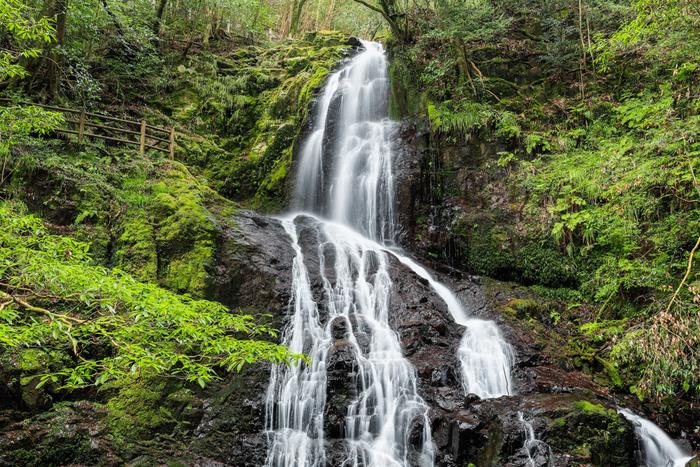 高さ30m横幅10m、水が岩肌を流れる水が細く白糸のように見えるところから、その名が付いた山口県の秋芳白糸の滝。近くで見ると水量もあり、岩肌を流れ落ちるその姿に、心が浄化されて行くようです。
