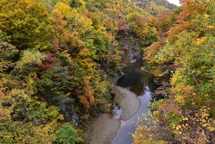 写真は、蛇行しながら穏やかに流れる豊平川。「白糸の滝」近くの豊平川に架かる玉川橋からの眺めです。紅葉のシーズンはとても美しく、のんびりと散策するのもいいですね…。