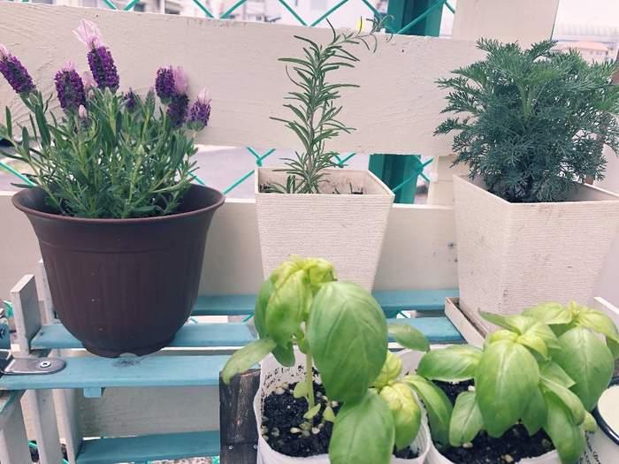 料理の時に少しずつ欲しいハーブ類も、意外と簡単に育てられます。ただ、繁殖力が強い物が多いので、寄せ植えにするとすぐに根詰まりしやすいため、鉢は苗毎に別々に植えましょう。