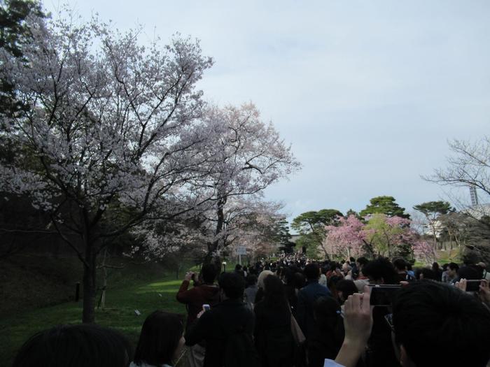 種々様々に春の花々や桜咲く頃は、寒さからも解放され、心浮き立ち、出掛けたくなる季節です。  けれども、ゆったり静かな散策を楽しむには、絶好の時期とは言えません。特に、桜が満開の3月末頃から4月初旬に例年開催されている『春季乾通り一般公開・桜の通り抜け』時は、大勢の人々が苑内へと流れ込むため、平時よりも混雑します。  【2018年『春季乾通り一般公開・桜の通り抜け』開催時の皇居内・乾通り。一般公開では、坂下門から入場し、乾通りを乾門へ向かって行進するが、開催中は、途中の「西桔橋」から直接「皇居東御苑」へ入苑出来るため、苑内は多くの花見客で混雑する。】