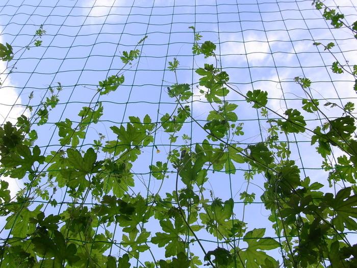 ベランダで気軽に始める「コンテナ菜園」初心者向けの野菜やハーブを育てよう♪