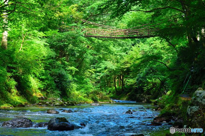 かずら橋と言えば、徳島県にある「祖谷のかずら橋」が有名ですが、実は福井県にもあるんです。木々が生い茂るなかにかかる素朴な橋は、物語の世界へ渡っていけそうな雰囲気です。全長44m、幅1.8m、高さ12m。足羽川渓谷に架かっていて、踏み板の隙間が広いため、独特の揺れがあります。
