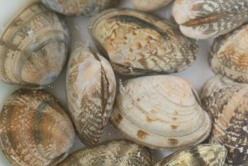 おすすめは、3%の海水に近い塩加減を、この時点で味見をして覚えておくと、次回、塩抜きする時に塩の量を目分量でも作れるので便利ですよ!