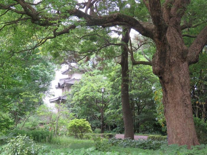 以下で示すのは、城好き、歴史好きの方でも楽しめる、苑内スポットを隈なく巡る「モデルコース」ですが、苑内の順路が定められているわけではないので、コースはあくまでも目安にして、季節や目的に応じて、思い思いに周って下さい。  【「野草の島」や「果樹古品種園」、「松の大廊下跡」がある本丸エリア内の緑深い遊歩道。手前の大樹は、楠(くすのき)、奥に見えるのは、旧江戸城の「富士見櫓」。(5月中旬撮影)】