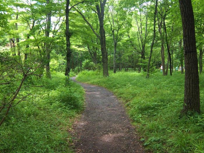 江戸城ならではの重厚な雰囲気、雅な「二の丸庭園」も素晴らしいですが、ゆったりした自然散策が好みなら、この「二の丸雑木林」が「東御苑」のハイライト。心身をリフレッシュするのに最高の場所です。  【現在「二の丸雑木林」には、コナラやクヌギを主として、イロハモミジ、アカンデ、ヤマザクラ、ウツギ等などの紅葉が楽しめる樹種が多く植林されている。(6月中旬の「二の丸雑木林」)】