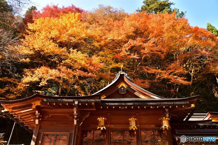 貴船神社および、貴船一帯は紅葉スポットとしても人気があり、紅葉シーズンは朝から晩まで多くの観光客で賑わいます。