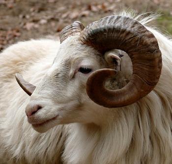 12星座の始まりである牡羊座は、独立や企業など新しいことを始めるお願いがおすすめです。