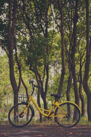 また、自由気ままに宮崎を楽しむならレンタサイクルも便利です。スポーツプラザ宮崎「JERSEY」で500円でレンタルすることができますよ!