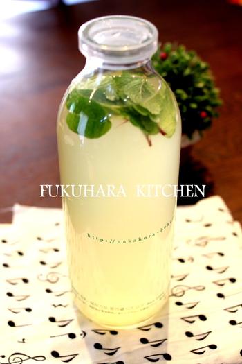 ライムとレモンの酸っぱさとハチミツなどの甘さが溶け合い、爽やかなフレッシュミントが香るドリンク。ビジュアルもきれいですね。写真のような透明なボトルに入れて持参すれば、アウトドアのテーブルにもおしゃれに映えます。