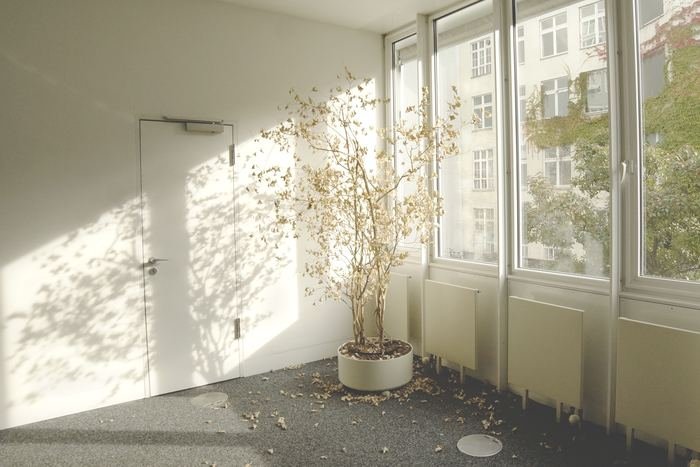 枯れてしまった観葉植物をそのまま放置するのは風水的にもよくないことで、せっかくの運気が逃げてしまうおそれがあるため注意が必要です。枯れてしまった植物は早めに取り除きましょう。  例えば、風水ではサボテンは悪い気を吸い込み続けると枯れてしまうといわれています。だから、観葉植物が枯れ果ててしまっても、悪い気を吸い取り、エネルギーを与え尽くした結果なのだ、という考え方に基づいて、しっかりと感謝してから処分するようにしてくださいね。