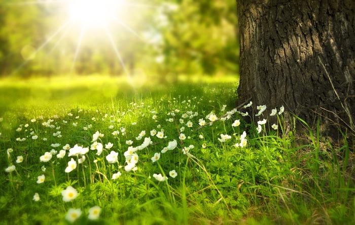 「陽の力」を借りて心も身体もヘルシーに。太陽と仲良くなるためにしたいコト