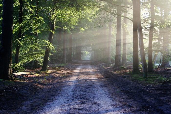 直射日光は肌に負担がかかりすぎるだけでなく、熱射病や熱中症などのリスクも。日光浴をするときは、木陰や軒先の日影など、陽が直接当たらない場所を選びましょう。