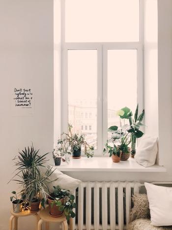 植物にとっても太陽は欠かせない存在です。光合成をしたり、花や果実の美しい色合いも太陽がもたらすもの。家の中にあるグリーンもたまには屋外に出してあげましょう。