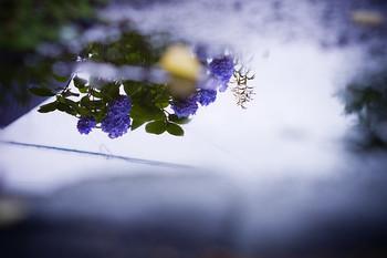 こちらは、水たまりに映る紫陽花。人と被らない、自分だけの視点を意識して撮影してみましょう♪