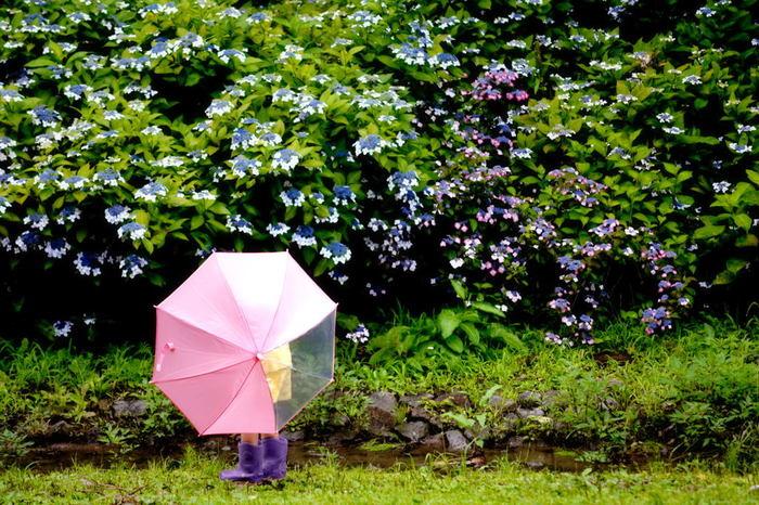 紫陽花に囲まれるような場所や、写真の背景全体が紫陽花になるような場所で撮るのがおすすめです。こちらの写真は、梅雨時期らしい傘や長靴も映えていてとても可愛らしい一枚です。