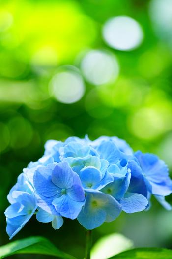 今年は○○○と一緒に。紫陽花と一緒に写真に残したい「モノ」「場所」