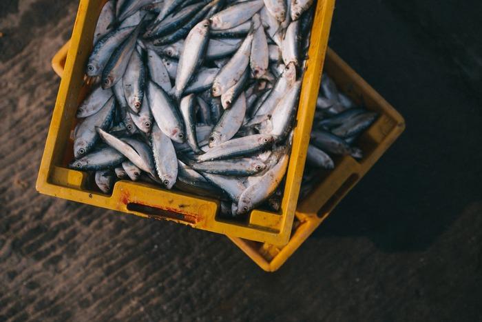夏はスタミナをつけたいからと、肉料理が多くなっていませんか?実は一年中出回っているアジやイワシは初夏~夏が旬のお魚です。脂がのって美味しい旬の味を楽しめるのに、スルーしてしまうのは勿体ない!ぜひレシピを参考にして、夏もお魚料理を献立に取り入れましょう。