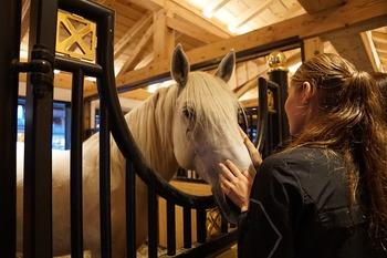 馬とのふれあいで癒しをもらえるのも、乗馬の大きな魅力の一つ。たくさん撫でてほっこりしましょう♪